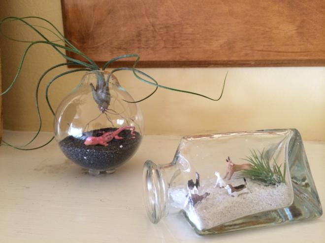 terrarium vase / bayareaassistant.com