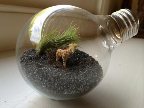 light bulb terrarium / bayareaassistant.com